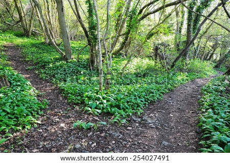 Scenic View of Forking Rocky Pathways on a Forest Trail - stock photo