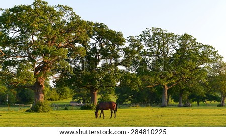 Scenic View of Horses Grazing in a Green Field - stock photo