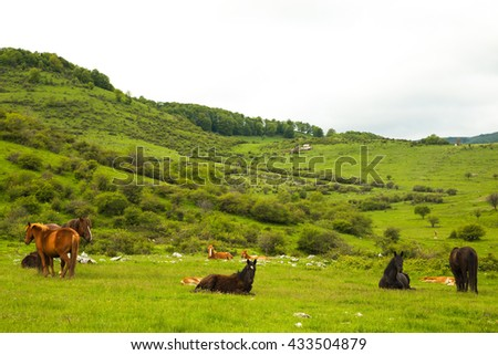 Scenic view of horses out to pasture in the mountain on a cloudy day - stock photo