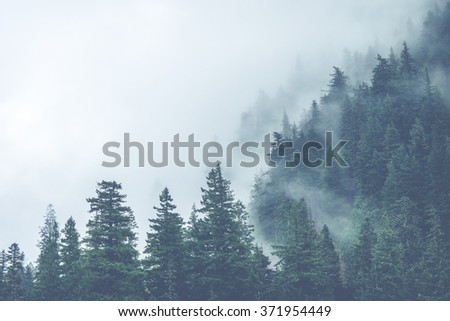 scenic view of mountain forests covering by fog.. - stock photo