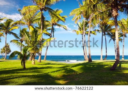Scenic view of palm trees on Grande Anse beach with sea in background, Reunion Island - stock photo