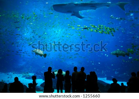 Scenic view of the deep water creatures - stock photo