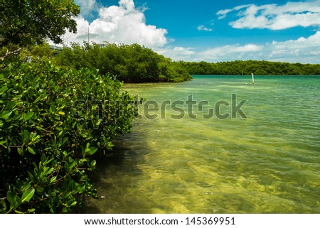 Scenic view of the Florida Keys with mangroves along the shoreline. - stock photo