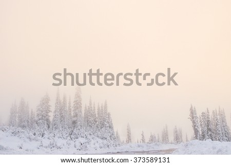 scenic view of tree covered with snow with fog in the sunset. - stock photo