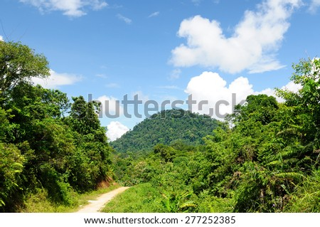 Scenic view of wild tropical jungle on the Kayan river, East Kalimantan, Indonesia Borneo. - stock photo