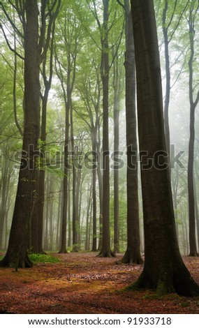scenic view on summer forest in a misty morning - stock photo