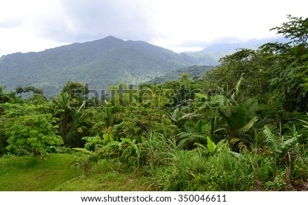 Scenic view on the green mountain in Puerto Rico island. Rain forest. USA - stock photo