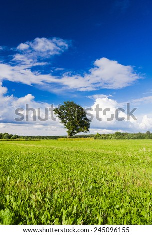 Scenic View Vibrant Summer  - stock photo