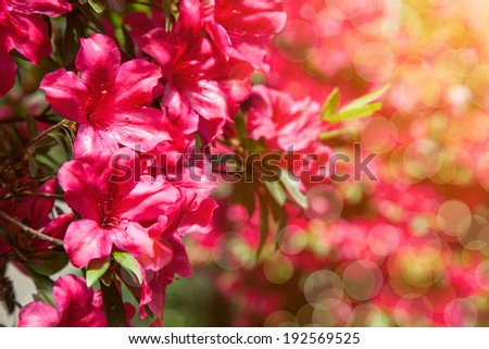 Scenic watercolor background, floral composition with red flowers - stock photo