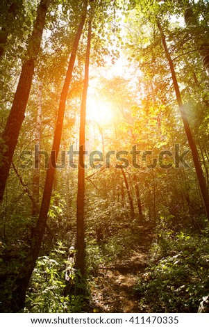 scenic wild forest lit by sunlight. background forest landscape - stock photo