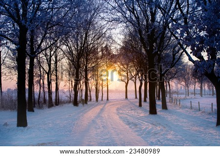 scenic winter landscape with sunset trough some trees coming