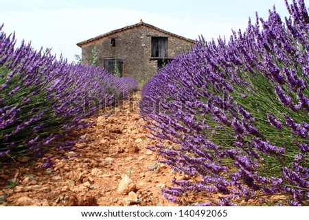 scents of lavender provence cultivated flower essences for cosmetics