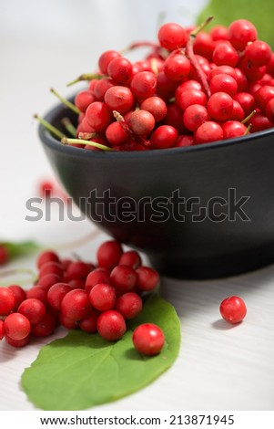 Schisandra chinensis or five flavor berry - stock photo