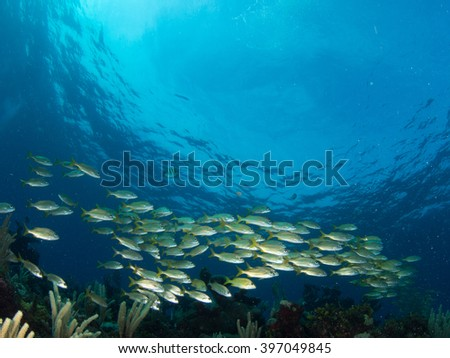 School of fish moving by in clear blue water