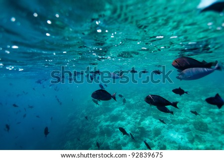 School of fish  - shoot from bellow the surface - stock photo