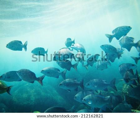 school of fish underwater. Similan islands. Thailand  - stock photo