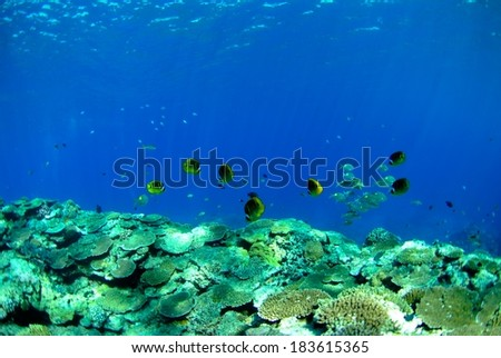 School of fishes in coral reef.