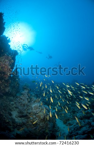 School of Goldband fusiliers (Pterocaesio chrysozona) with scuba divers silhouettes in the background. Anemone city, Ras Mohamed National Park, Red Sea, Egypt. - stock photo