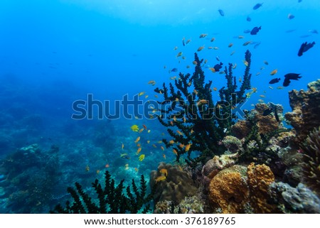 School of orange fish on coral reef close-up - stock photo