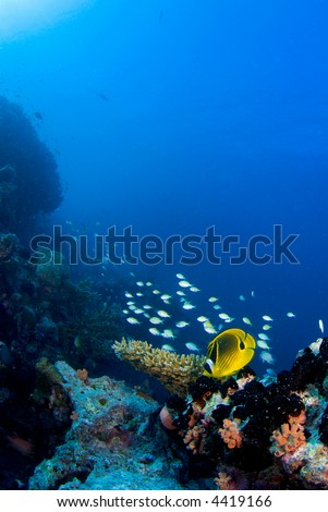 School of reef fish on the coral reef