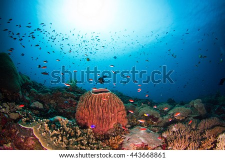 School of the small fished around the hard coral monument, above the Indonesian reefs of Nusa Penida. Schooling fish in shallow water.   - stock photo