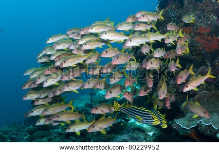 School of various tropical fish on a coral reef in Bali, Indonesia - stock photo