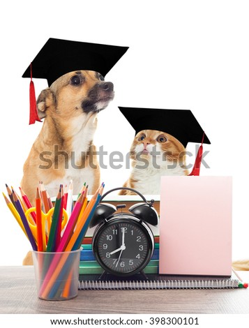 school supplies and funny pets - stock photo