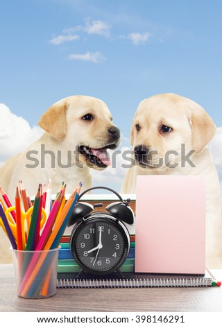 school supplies and two labrador puppy - stock photo