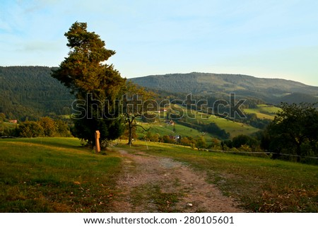 Schwarzwald / Black Forest / View over the hills and forest of Black Forest. - stock photo