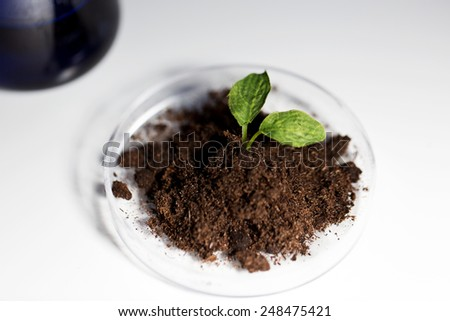 science, biology, ecology, research and green future - concept - close up of petri dish with plant and soil in bio laboratory - stock photo