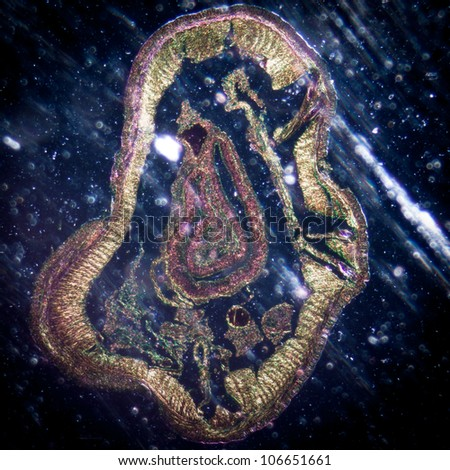 science micrograph animal earthworm crosscutting - stock photo