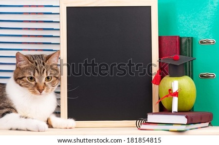 Scientific cat with educational accessories and blank board for your text - stock photo