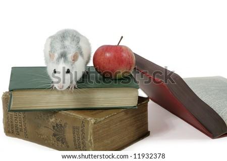 scientific rat sits on books - stock photo