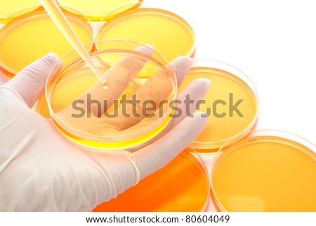 Scientist holding a Petri dish of media solution under a laboratory pipette with drop of liquid above Petri dishes filled with chemical media during a scientific experiment in a science research lab