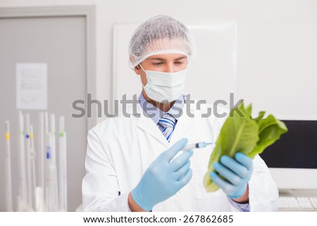 Scientist holding lettuce and injecting fluid with syringe in laboratory