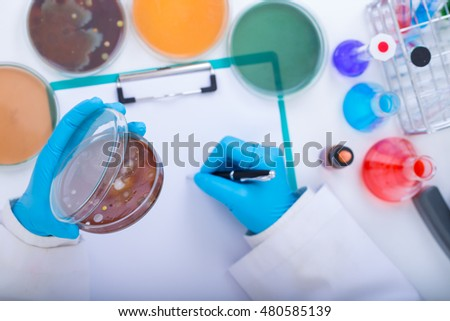 scientist , The growth of bacteria, the cultured in the lab.