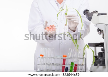 Scientists research Seedlings to determine species are best Corn in laboratory.  - stock photo