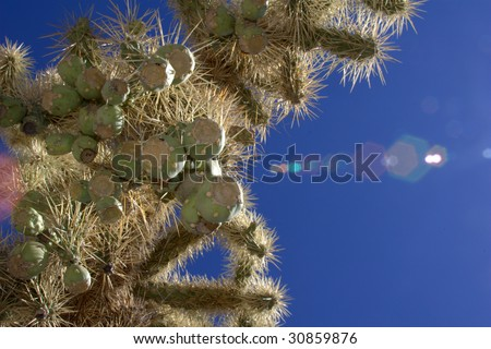 Scorching Desert Sun w/ Jumping Cholla Cactus - stock photo