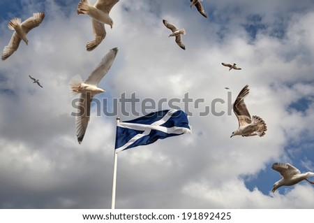 Scottish flag with Seagulls - stock photo