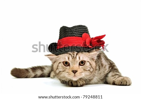 Kittens Wearing Top Hats Kitten Wearing Black Hat