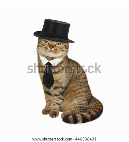 Scottish Straight cat in the cylinder hat and tie on white background