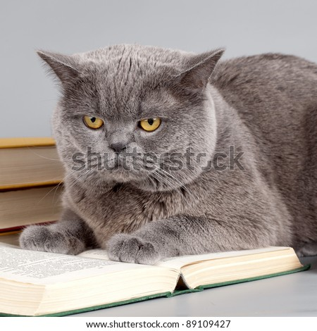 Scottish straight on the book - stock photo