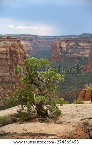 Scraggly bush atop mountain cliffs with rain storm in background - Utah - stock photo