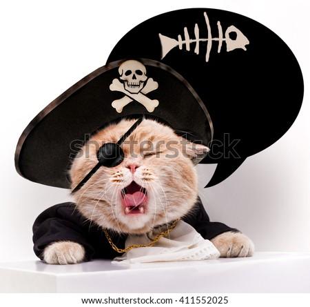 Screaming cat in a pirate hat - stock photo