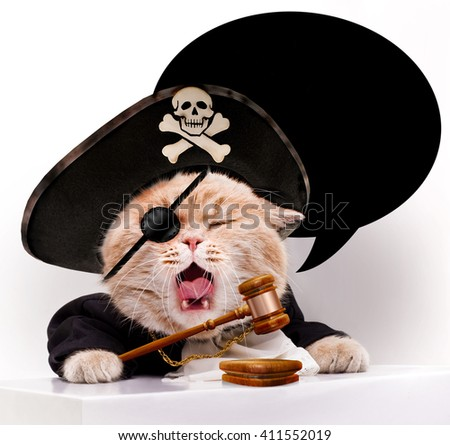 Screaming cat in a pirate hat.Cat referee.Cat with judicial gavel. - stock photo