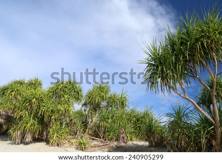 Screw Pine forest inSaint Martins Island of Bangladesh - stock photo