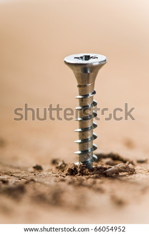 screw screwed in wood with wood shavings - stock photo