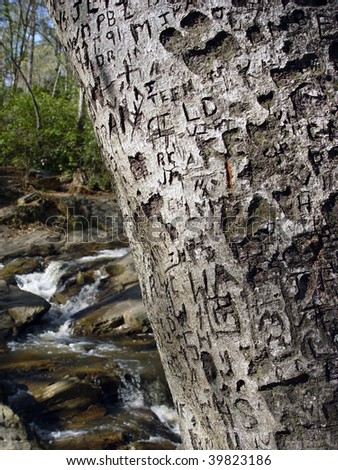 Scribed name and initials on a tree - stock photo