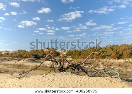 Scrub Brush and smaller trees growing on the sand dunes of Cape Hatteras North Carolina - stock photo