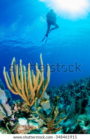 SCUBA diver above corals on a tropical reef - stock photo